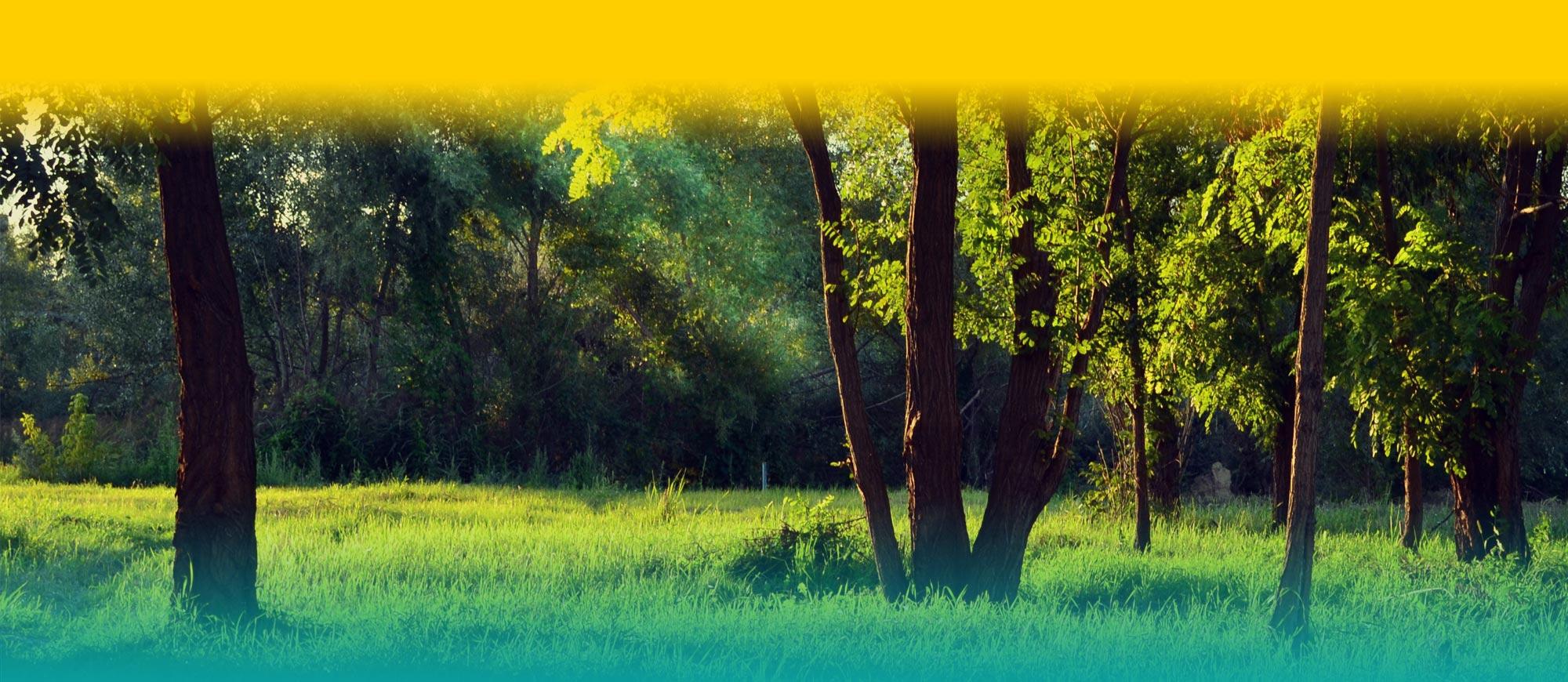 eveille-ta-nature-yoga-rhone